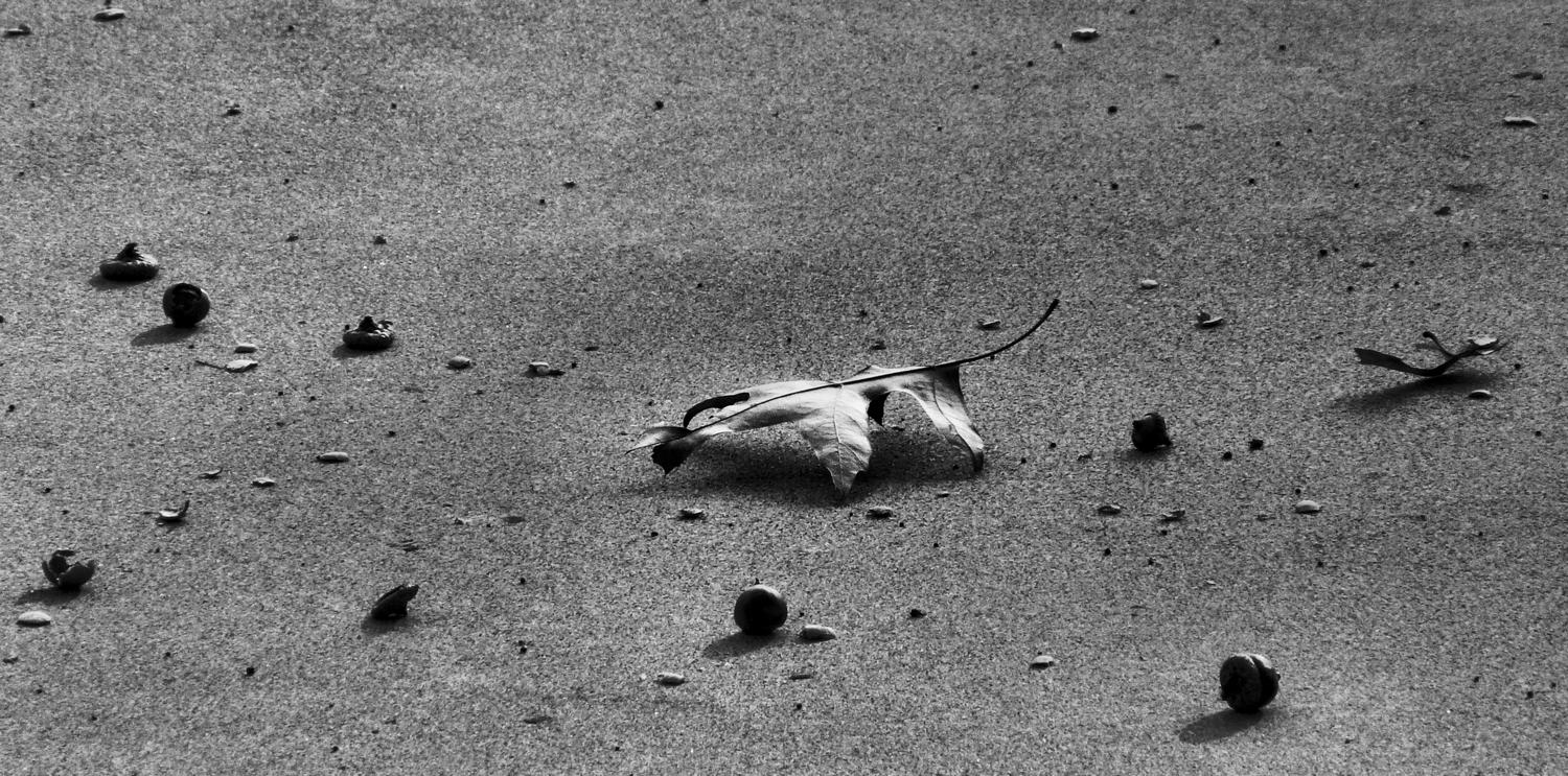 black and white leaf against concrete - Autumn - Panasonic DMC-FZ18 - - art  - photography - by Tony Karp