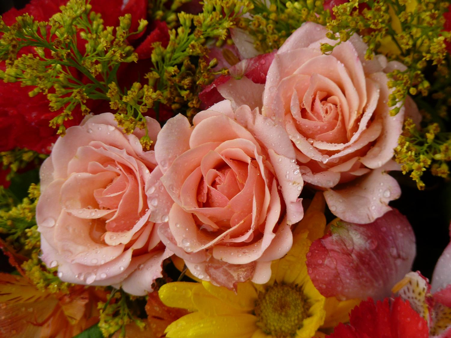 - Some pink flowers from the Hobbitt's birthday bouquet. - Panasonic DMC-FZ35 - Tony Karp, design, art, photography, techno-impressionist, techno-impressionism, aerial photography , drone , drones , dji , mavic pro , video , 3D printing - Books -
