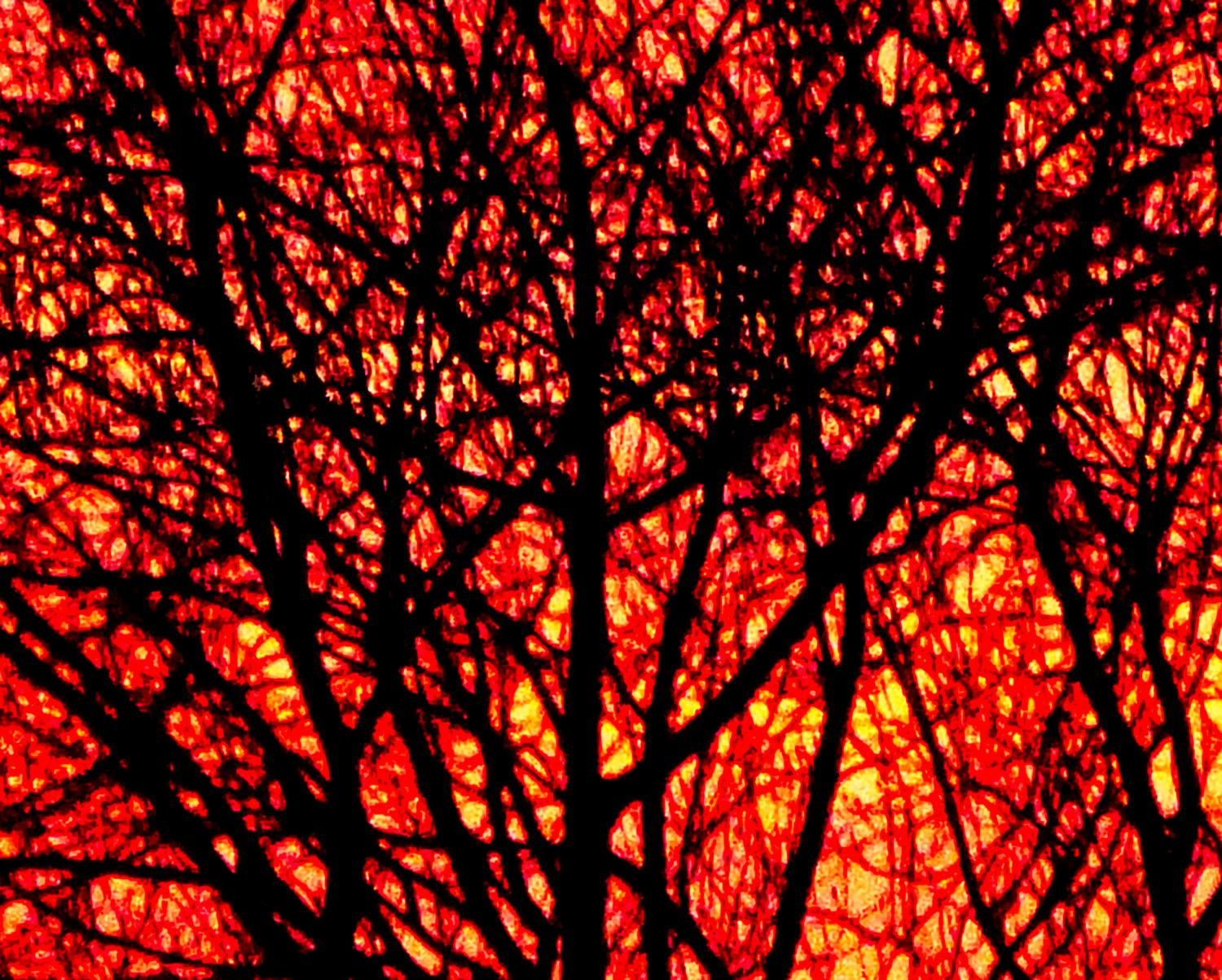 - Sunrise sets the trees on fire <br>--- Click to see ORIGINAL --- - -  Panasonic DMC-FZ150 - post processing - Tony Karp, design, art, photography, techno-impressionist, techno-impressionism, aerial photography , drone , drones , dji , mavic pro , video , 3D printing - Books -