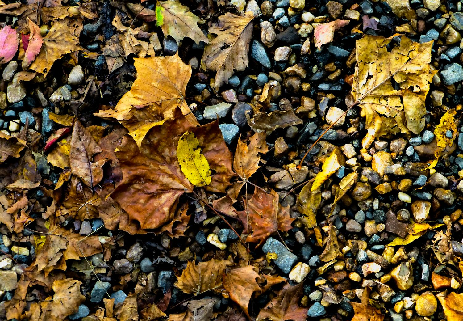- Leaves on a gravel road <br>--- Click to see ORIGINAL --- - Panasonic DMC-ZS20 - Tony Karp, design, art, photography, techno-impressionist, techno-impressionism, aerial photography , drone , drones , dji , mavic pro , video , 3D printing - Books -