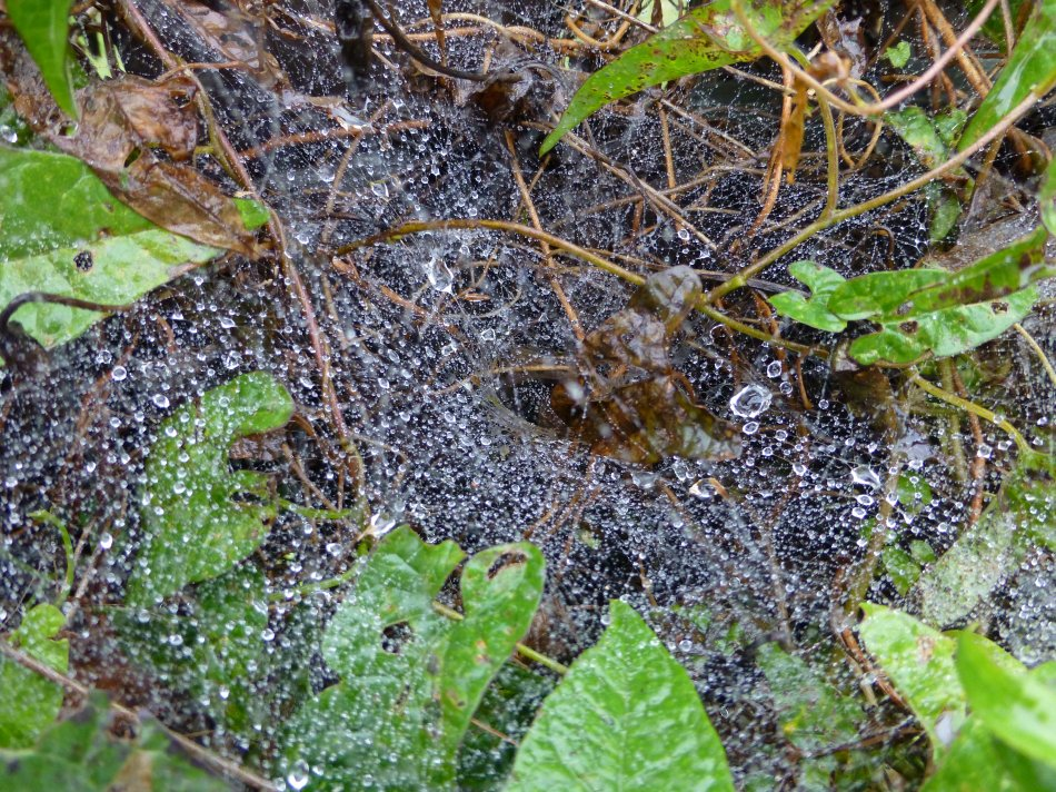 - Fresh rain on a spider web <br>--- Click to see ORIGINAL --- - Panasonic DMC-ZS20 - Tony Karp, design, art, photography, techno-impressionist, techno-impressionism, aerial photography , drone , drones , dji , mavic pro , video , 3D printing - Books -