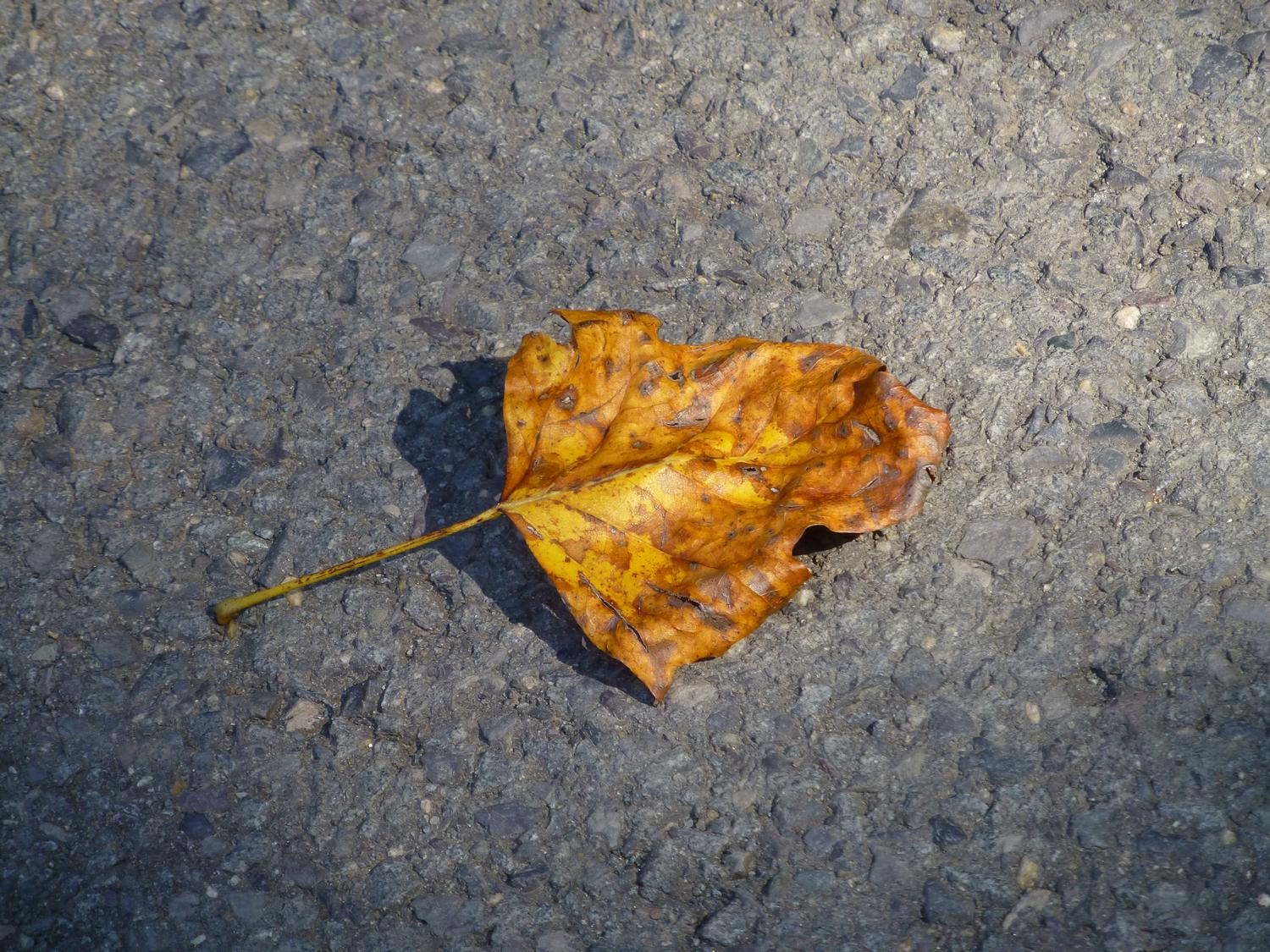 - A leaf on asphalt <br>--- Click to see ORIGINAL --- - Panasonic DMC-ZS20 - Tony Karp, design, art, photography, techno-impressionist, techno-impressionism, aerial photography , drone , drones , dji , mavic pro , video , 3D printing - Books -